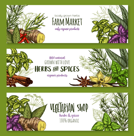 Herbs and spices sketch banners for farm market or seasonings shop. Vector design template of chili pepper spice and oregano or basil, dill or parsley flavoring and thyme or cumin and bay leaf.