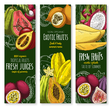 Exotic tropical fruits banners for farm market or fresh juice. Vector sketch mango, guava or durian and mangosteen, tropic papaya and juicy rambutan or dragon fruit pithaya, feijoa or lychee fruit. Illustration