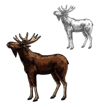 Elk wild animal sketch vector icon side view. Wild mammal elk or moose species for wildlife fauna and zoology or hunting sport team trophy symbol and nature adventure club design Banco de Imagens - 93365944