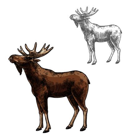Elk wild dier schets vector pictogram zijaanzicht. Wilde zoogdier elanden of elanden soorten voor dieren in het wild fauna en zoölogie of jacht sport team trofee symbool en natuur avonturenclub ontwerp