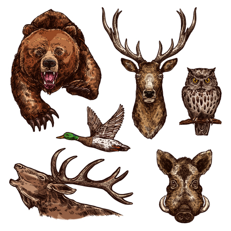 Wild animals and birds sketch icons. Vector isolated set of grizzly bear, elk antlers or deer and owl with duck, aper or hog boar for hunting open season or wildlife zoo and hunt adventure 일러스트