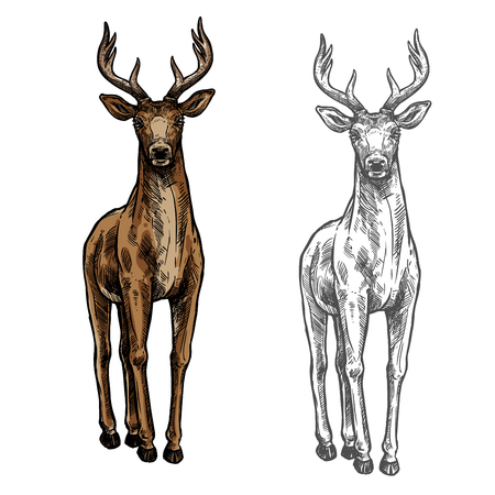Elk hind vector sketch wild animal isolated icon illustration. Ilustração