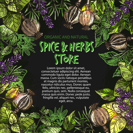 Herbs and spices sketch poster for farm market store or seasonings shop. Vector design template of lavender spice and oregano or basil, poppy seeds and rosemary flavoring and thyme or peppermint