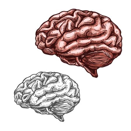 Menselijk orgel hersenen vector schets pictogram