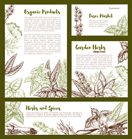 Vector organic spices and herbs seasonings sketch Illustration