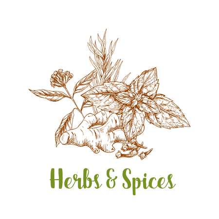 Herbs and spice sketch with rosemary, mint, ginger Illustration