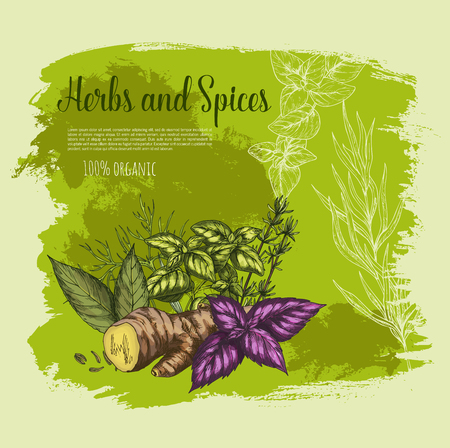 Vector natural spices and herbs poster for shop