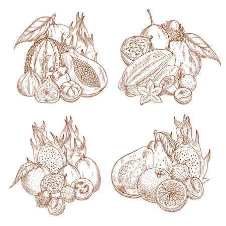 Exotic tropical fruits sketch harvest for farm shop or market store. Vector juicy mangosteen, figs or longan and orange, passion fruit or durian and grapefruit, papaya or mango and yuzu or feijoa.