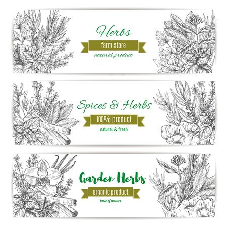 정원 허브와 향신료 배너를 설정합니다. 바 질, 민트와 로즈마리, 계 피, 바닐라, 파 슬 리, 아니 스, 백 리 향, 생강. 유기 농산물 라벨 디자인. 일러스트