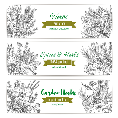 Garden herbs and spices banner set. Basil, mint and rosemary, cinnamon, vanilla and parsley, anise, thyme and ginger.  Organic farm product label design.