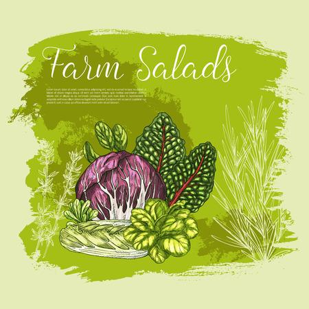 벡터 포스터 스케치 신선한 농장 샐러드 야채