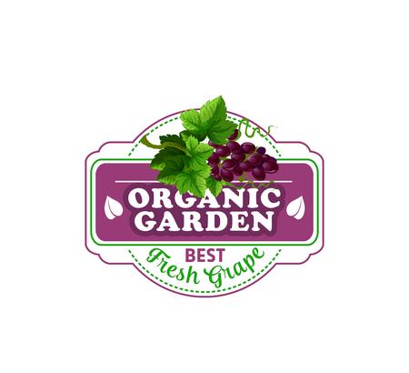 Icona della frutta di vettore dell'uva rossa per il mercato dell'azienda agricola Archivio Fotografico - 94133659