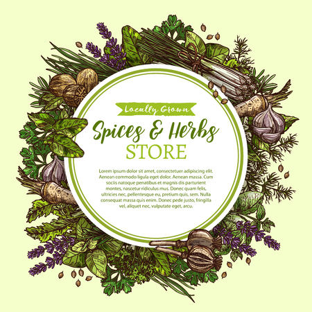 Vector sketch poster for spices and herbs store