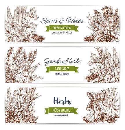 허브와 향신료 유기 식물 스케치 배너. 향미료, 고추 및 민트, 로즈마리, 계 피, 파 슬 리. 정원 허브 농장 저장소 디자인입니다.