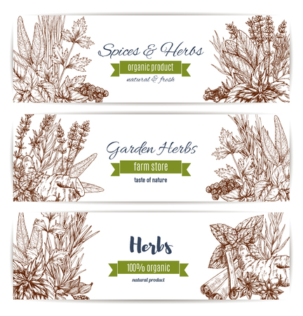 Herbs and spices organic plant sketch banners. Basil, pepper and mint, rosemary, cinnamon and parsley. Garden herbs farm store design. Ilustração