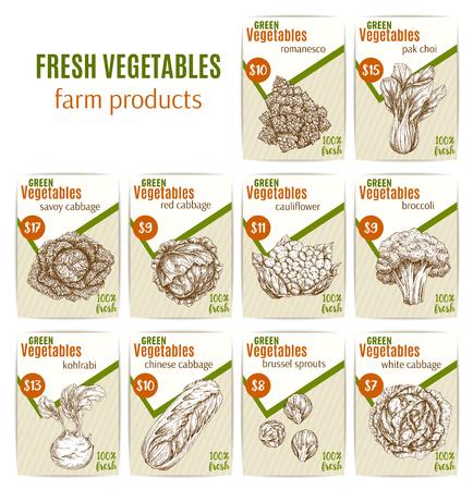 야채 가게 가게 또는 채소 시장 상점에 대한 스케치 가격 카드. 벡터 농장 수확 romanesco 샐러드와 브뤼셀 새싹 또는 사 보이와 콜리 플라워 양배추, 브로
