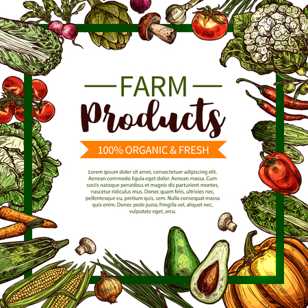 Vector sketch poster of farm organic vegetables. Illustration