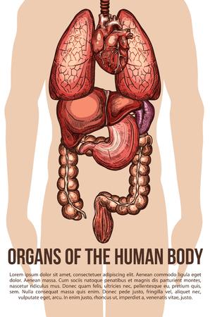 Human Body Internal Organs Icons Set Royalty Free Cliparts Vectors