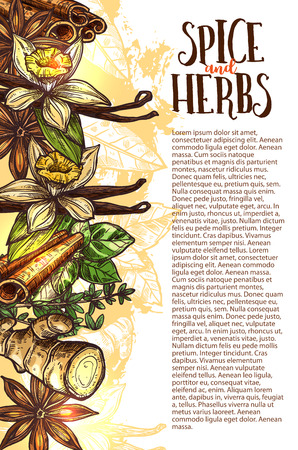 Herbs and spice sketch poster design for farm herbal store or spices market. Vector ginger root, vanilla pos or anise star flavoring and cinnamon seasoning condiment for cooking recipe or culinary
