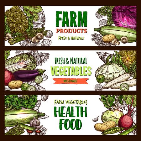 야채 및 팜 채소 제품 또는 건강한 채식 식품 시장 스케치 배너. 벡터 양배추, 호박 스쿼시 또는 무와 무, 아보카도 또는 유기농 당근과 토마토, 호박 또 일러스트