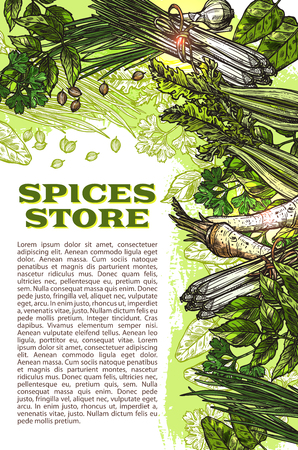 Specerijen opslaan schets poster ontwerpsjabloon van kruiden kruiderijen. Vector biologische selderij of dille en basilicum, mierikswortel van chili peper en oregano of peterselie koken kruiden of salie en laurier