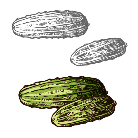 Cucumbers sketch icon. Vector isolated symbol of fresh farm grown vegetarian cucumber gourd or pickles vegetable fruit for veggie salad or grocery store and market design