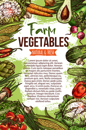 Vegetables and natural farm veggie organic products sketch poster. Vector cabbage, zucchini squash or avocado and cucumber, cauliflower and carrot or radish and tomato, fresh pumpkin and garlic Illustration