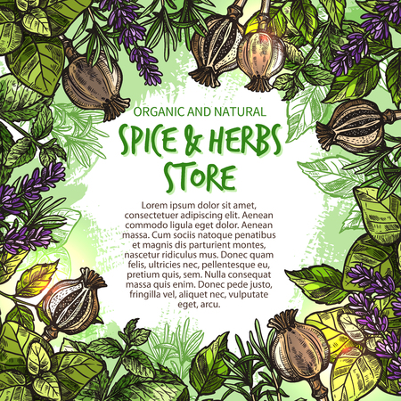 Spice and herbs seasonings and condiments sketch poster for farm store market. Vector spices and organic herb basil and poppy seeds or cilantro, tarragon or chili pepper and oregano cooking seasoning Ilustracja