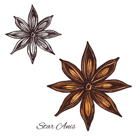 Sternanisskizze des badian Gewürzs Bestandteil kochend. Anisfrucht mit Samen lokalisierte Ikone für die Lebensmittelgewürz- und -aromastoffverpackung und kochte Buch- oder Gewürzshopaufkleberdesign