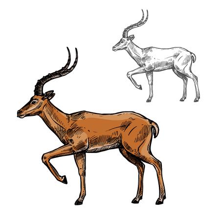 Gazelle of antilope schets van Afrikaanse en Indiase wilde zoogdier dier. Bruine antilope met gebogen horens die zich met opgeheven been geïsoleerd pictogram voor safaritour, jachtsport en dierentuinthemaontwerp bevinden