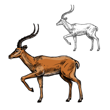 Gazelle or antelope sketch of african and indian wild mammal animal. Brown antelope with curved horns standing with raised leg isolated icon for safari tour, hunting sport and zoo themes design Vettoriali