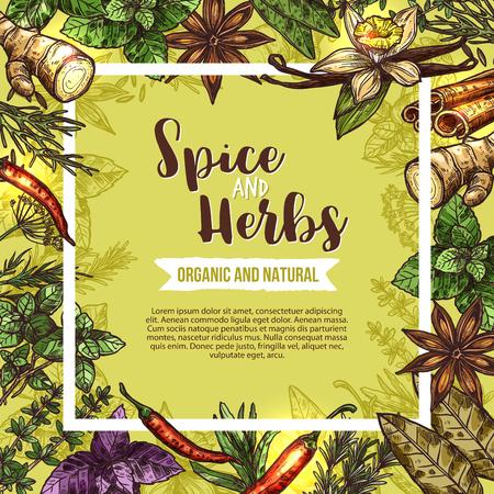 Kruiden en specerijen poster met frame van kruiden schetsen. Rozemarijn, basilicum en tijm, chili peper, munt en kaneel, vanille, gember en peterselie, laurier, anijs en dille voor het ontwerpen van kruidenetiketten