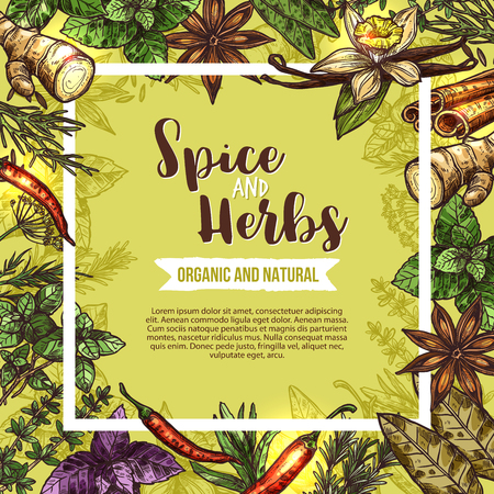Herb and spice poster with frame of seasoning sketches. Rosemary, basil and thyme, chilli pepper, mint and cinnamon, vanilla, ginger and parsley, bay leaf, anise and dill for spice shop label design