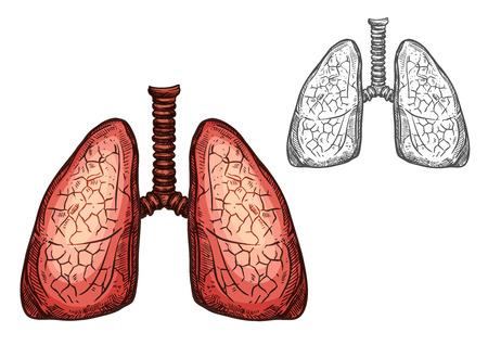 Longorgaan van menselijke anatomie geïsoleerde schets van luchtwegen. Paar longen, inwendige organen van het menselijk lichaam met luchtpijp voor het ontwerpen van medicijnen, wetenschap, biologie en gezondheidszorg Stock Illustratie