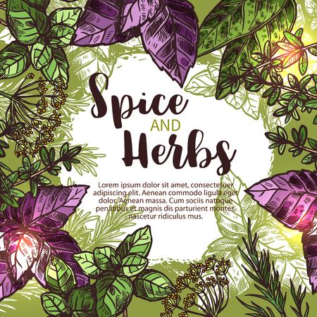 신선한 식물, 조미료 및 조미료와 향신료와 허브 스케치 포스터. 녹색 및 빨강 바 질, 로즈마리와 백 리 향, 민트, 베이 리프, 딜 및 샐비어 테두리 테두