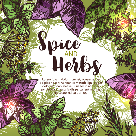 Spice and herb sketch poster with fresh plant, seasoning and condiment. Green and red basil, rosemary and thyme, mint, bay leaf, dill and sage frame border with text layout in center for food design
