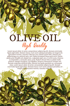 Olive oil sketch poster of organic natural food product. Olive tree branch with green leaf and fruit grunge banner with text layout for extra virgin olive oil bottle label and vegetarian food design. Ilustração