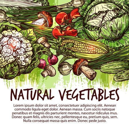 자연 신선한 채소와 버섯 스케치의 야채 포스터. 토마토, 양배추, 양파 및 무, 녹색 양파, 샴 피뇽 및 옥수수, 오이, cep 및 꽃 양배추 농장 시장 디자인