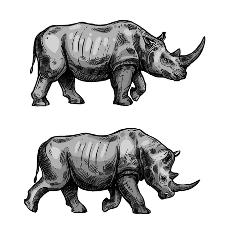 Rhino walking sketch of african mammal animal. Wild rhinoceros attacking with bended head isolated icon for hunting sport or african safari travel tour themes design Vettoriali