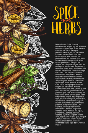 Herb and spice chalkboard banner with spicy plant Ilustracja