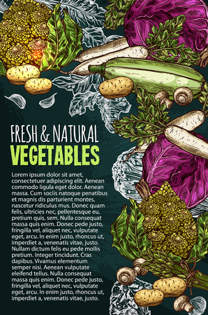 Vector sketch poster of natural fresh vegetables