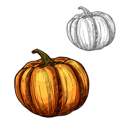Pumpkin vector sketch vegetable icon Illustration