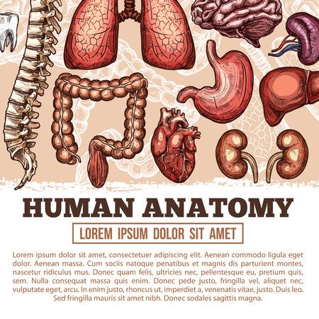 인간의 장기 해부학 벡터 스케치 포스터