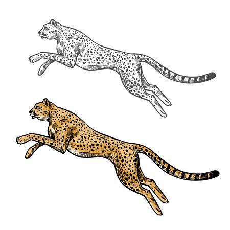 Cheetah vector sketch wild animal icon Stock Illustratie