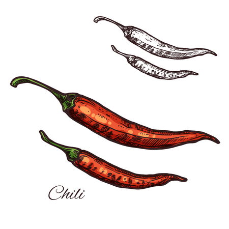Chili pepper seasoning plant vector sketch icon