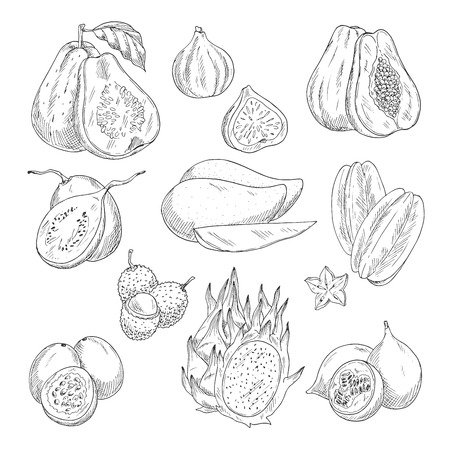 Vector exotic fruits sketch isolated icons
