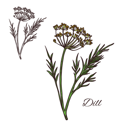 Dill seasoning plant vector sketch plant icon Illustration