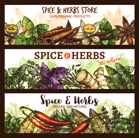 Herbs and spices farm market store banners design template. Vector organic cinnamon, thyme or rosemary and ginger root, basil and chili pepper spice and anise or natural oregano cooking seasonings Stock Vector - 95328609