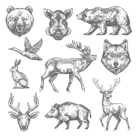 Vector sketch wild animal icons for hunting or zoo