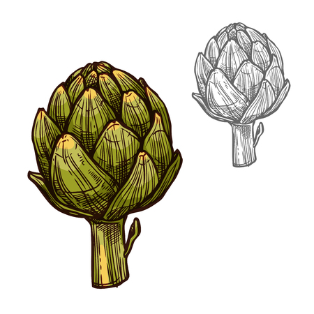 Artichoke seasoning plant vector sketch plant icon